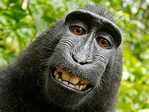 smiling monkey